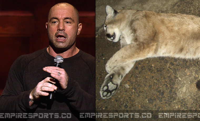 UFC's Joe Rogan Kills Mountain Lion Outside Comedy Club