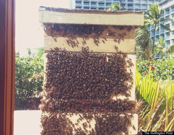 Waikiki Hotel Welcomes Its Newest Residents: 80,000 Bees
